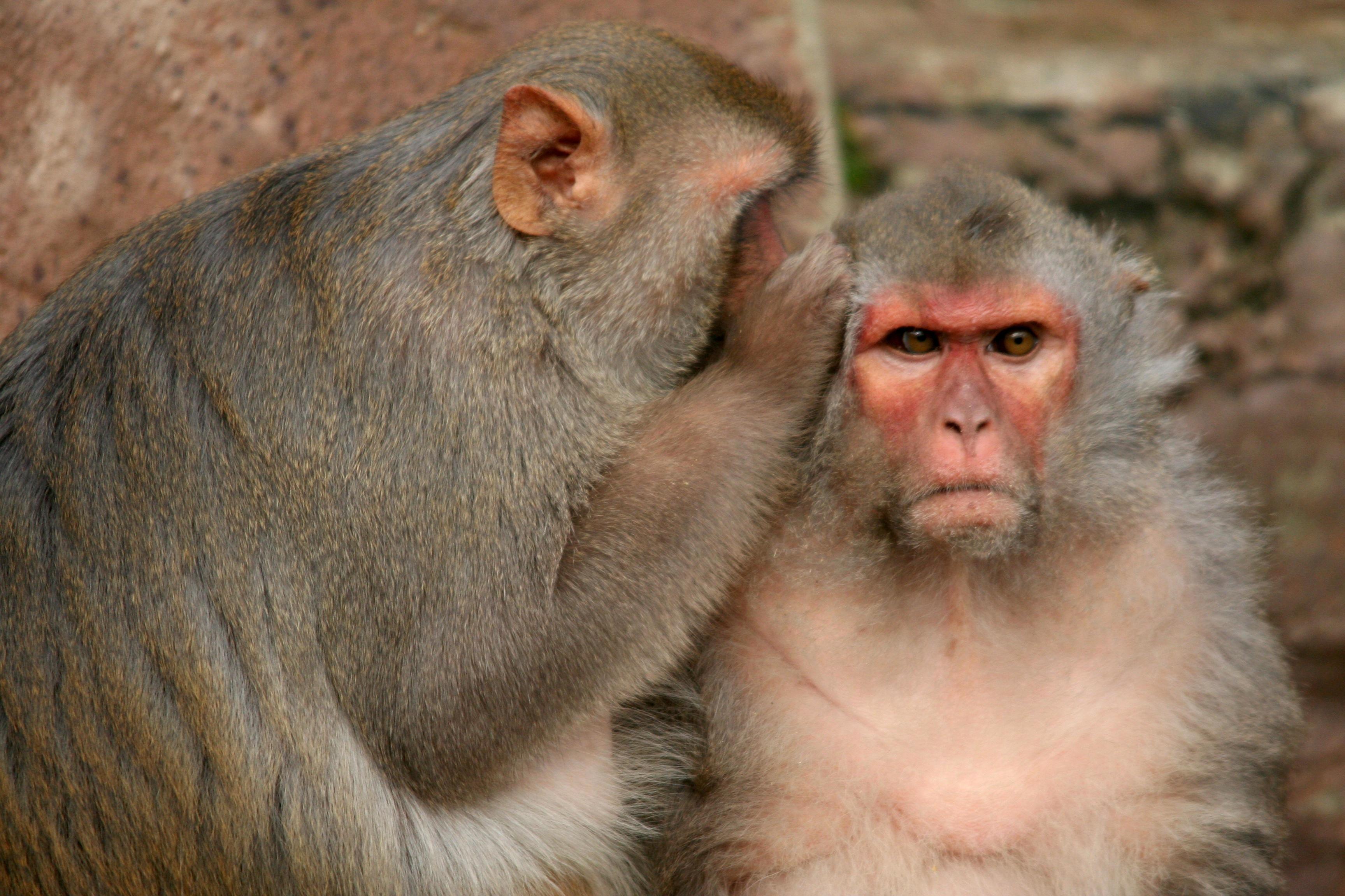 Primeira rede de cérebros (Brainets) de animais pode ser a base para os computadores orgânicos