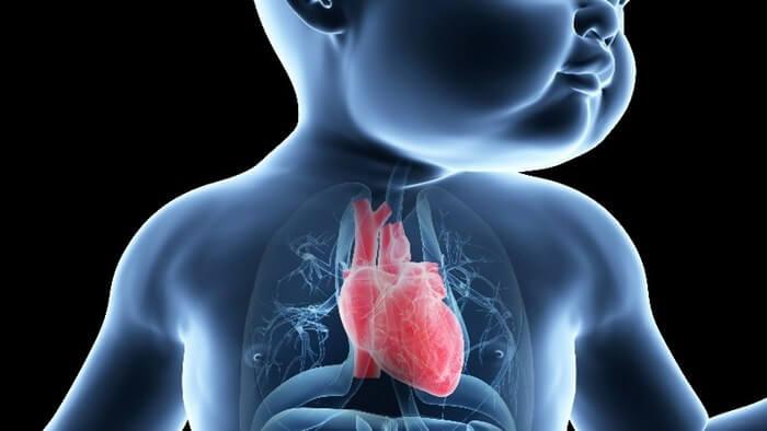 O futuro será tratamento personalizado: coração virtual 3D