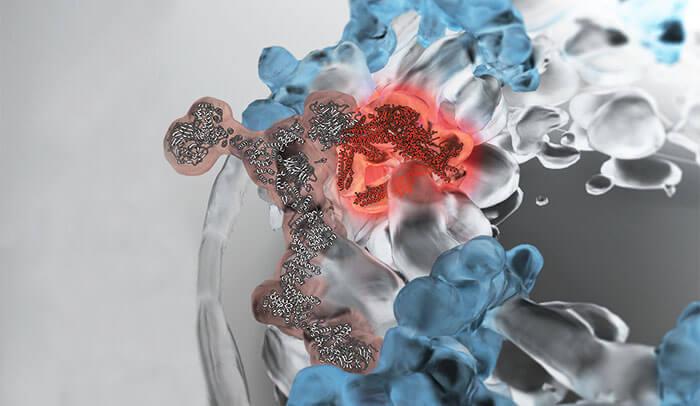 Uma nova luz sobre a jornada do RNA