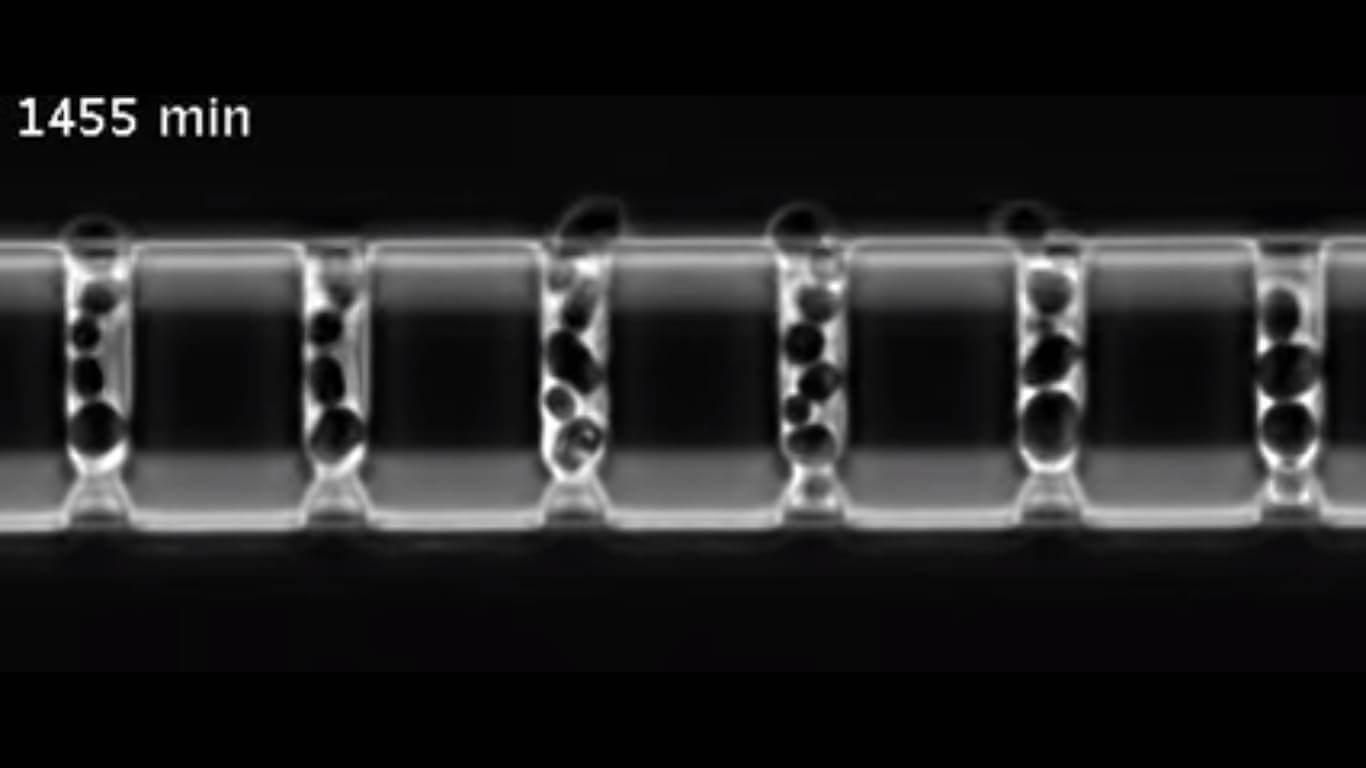 Cientistas decifram mecanismos nas células que prolongam a longevidade